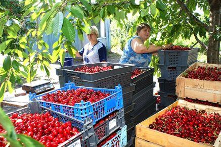 В Ростовской области — благоприятные условия для развития садоводства и виноградарства